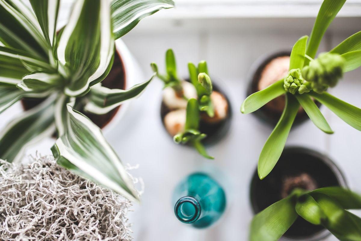 https://www.intarzia.ro/wp-content/uploads/2019/09/growth-plants.jpg